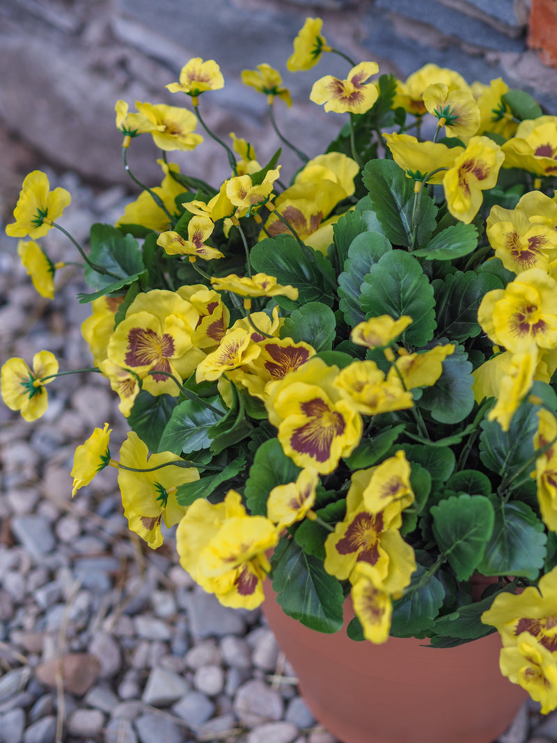 Pansy planter (yellow)