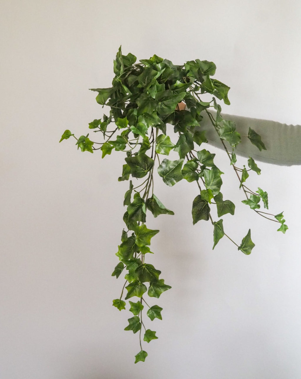 Green Hanging Ivy
