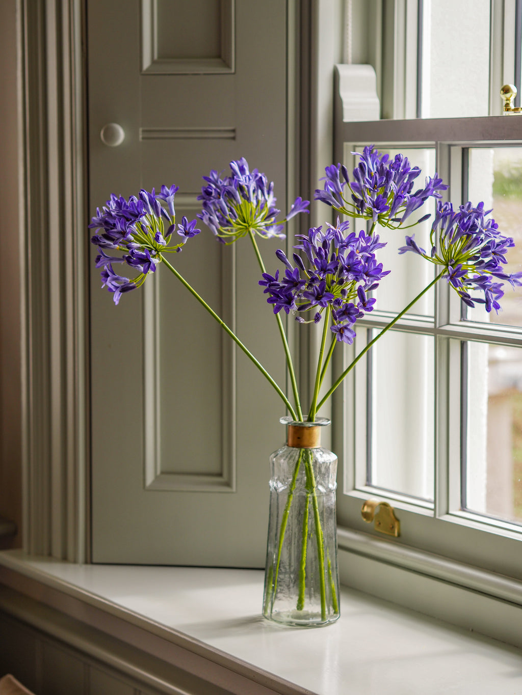 Simply Agapanthus