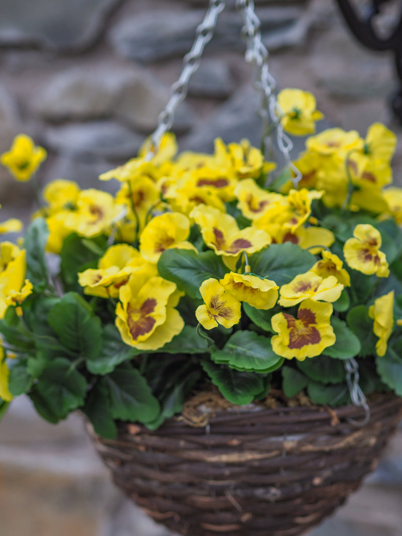Pansy hanging basket (yellow)