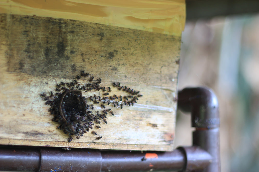 Empty Pollination Box