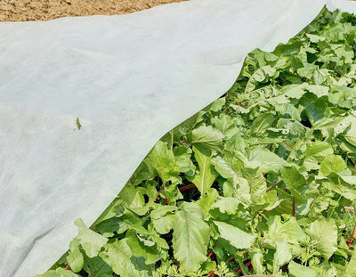 Frost Blanket as an Effective Means to Extend Vegetable Growing Season