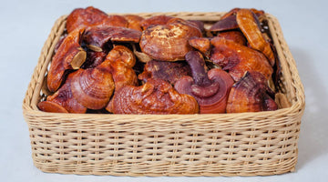 The Best Medicinal Mushrooms for Health and Longevity