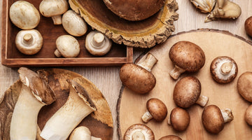 Best medicinal mushrooms for health, according to the experts