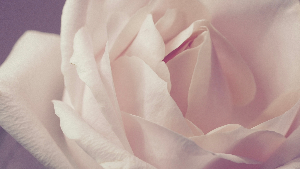 Rose Hydrosol vs. Rose Water: Know the Difference Before you Purchase Your Next Rose Toner