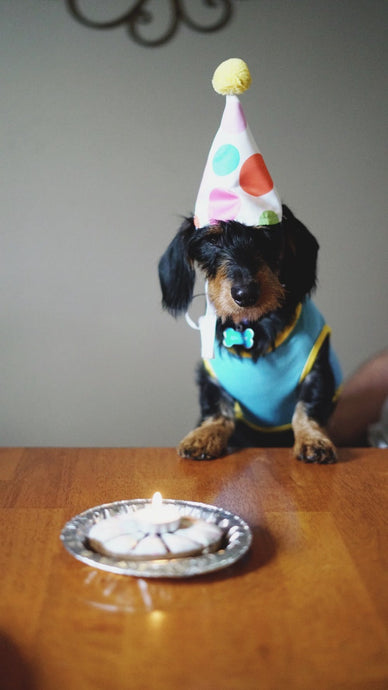 Planning an awesome party for your dog.