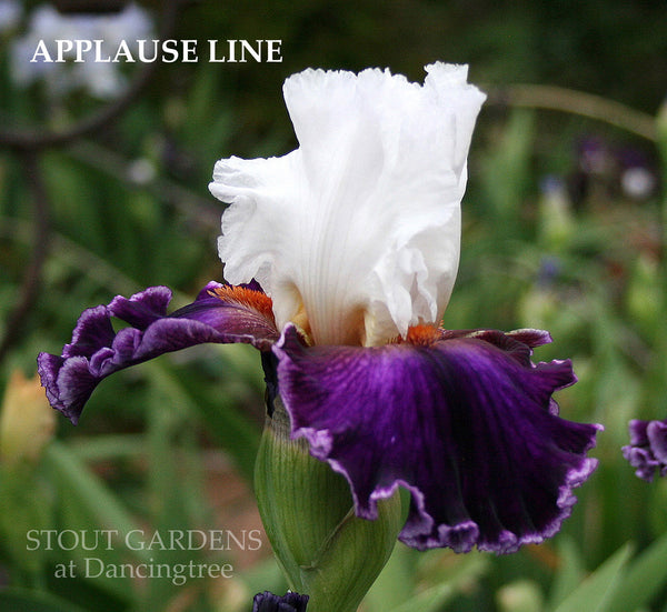 Iris Applause Line