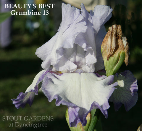 Iris Beauty's Best