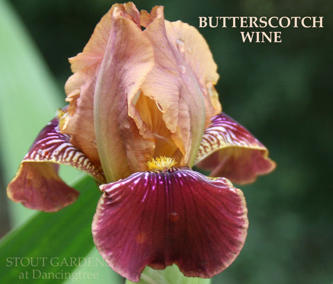 Iris BUTTERSCOTCH WINE