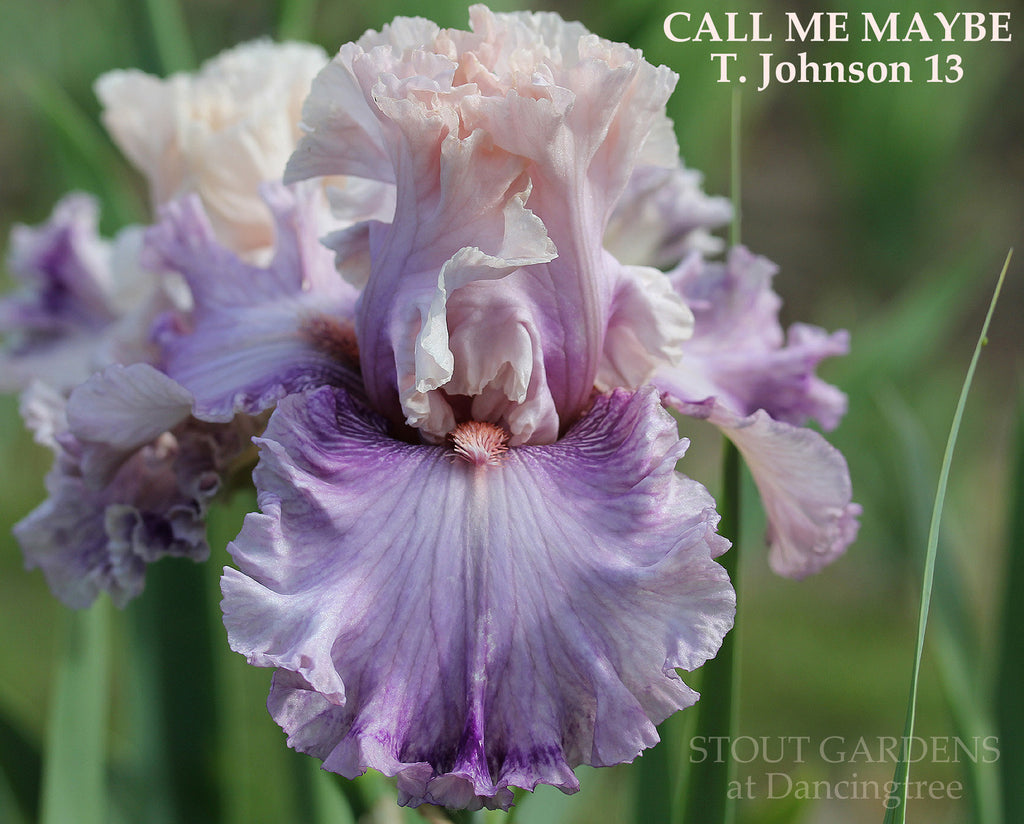 Iris Call Me Maybe