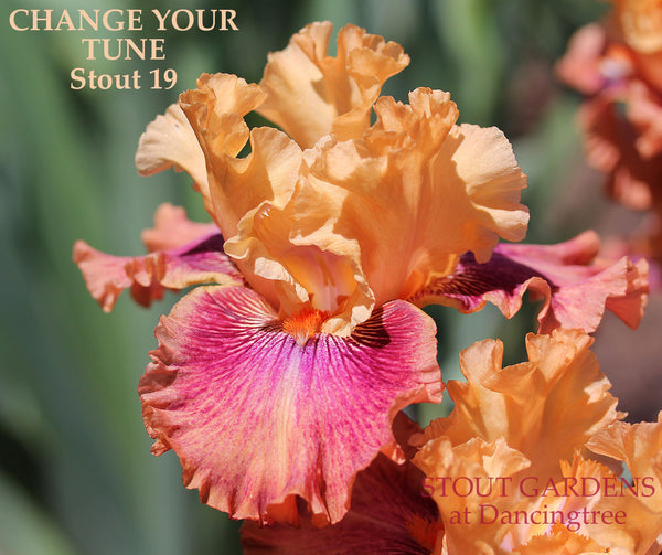 Iris CHANGE YOUR TUNE