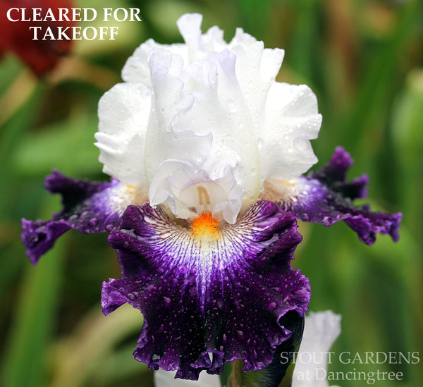 Iris CLEARED FOR TAKEOFF