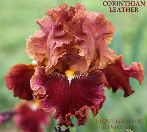 Iris Corinthian Leather