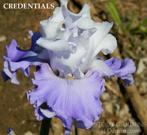 Iris CREDENTIALS