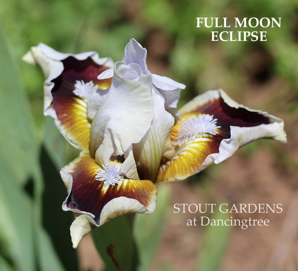 Iris Full Moon Eclipse
