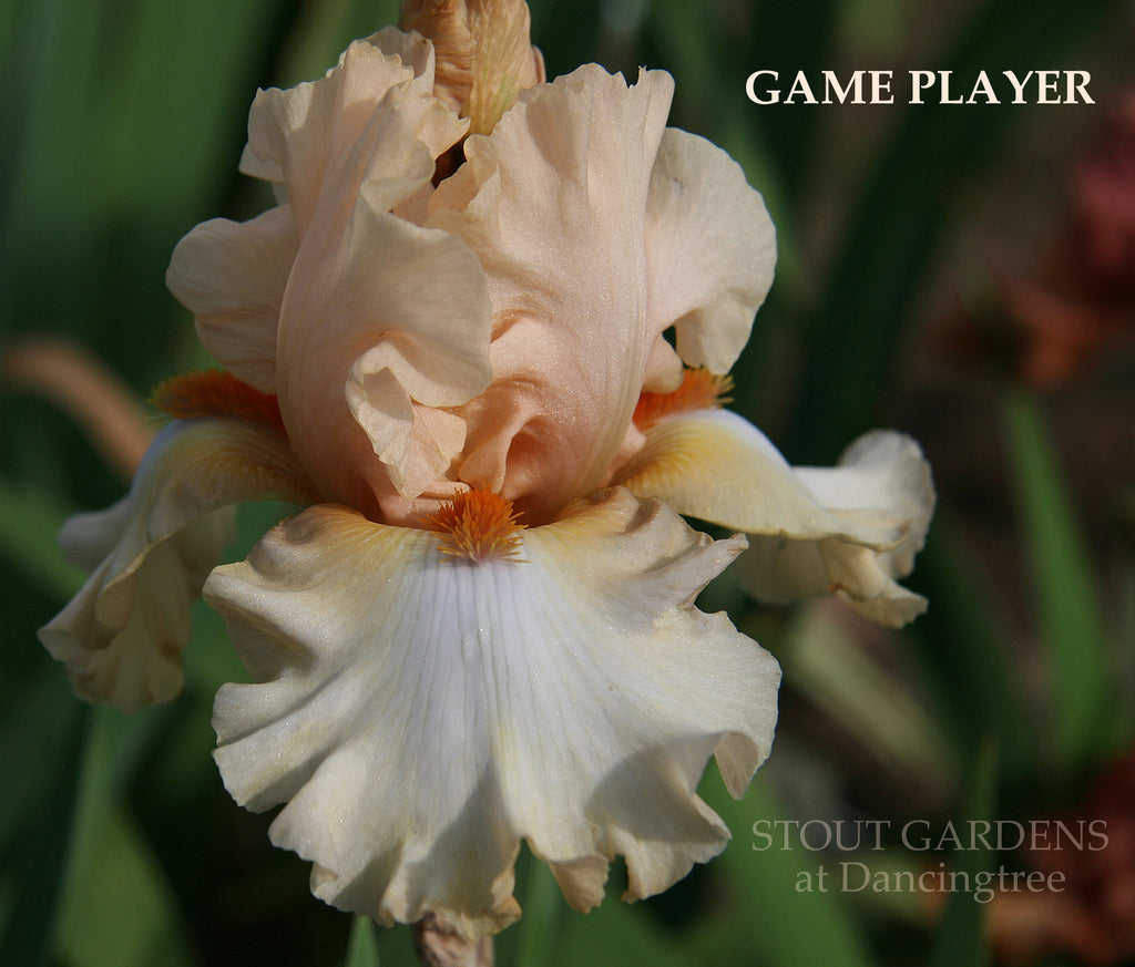Iris GAME PLAYER