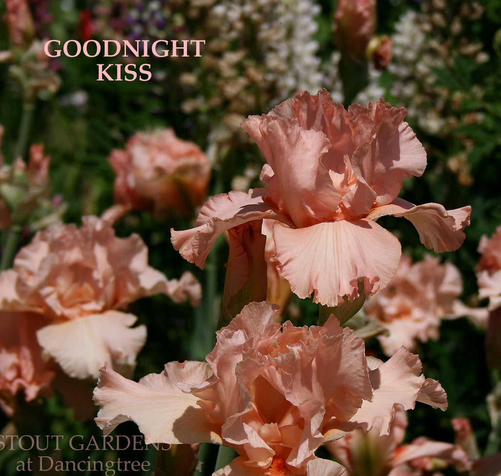 IRIS GOODNIGHT KISS