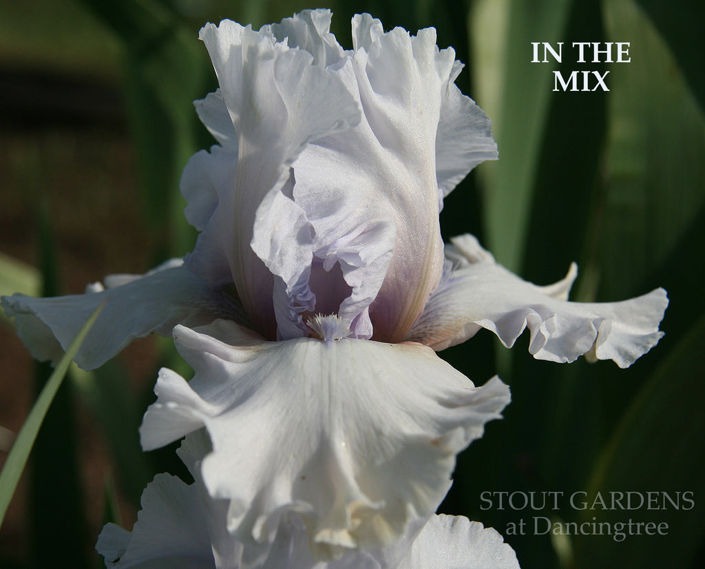 Iris In The Mix