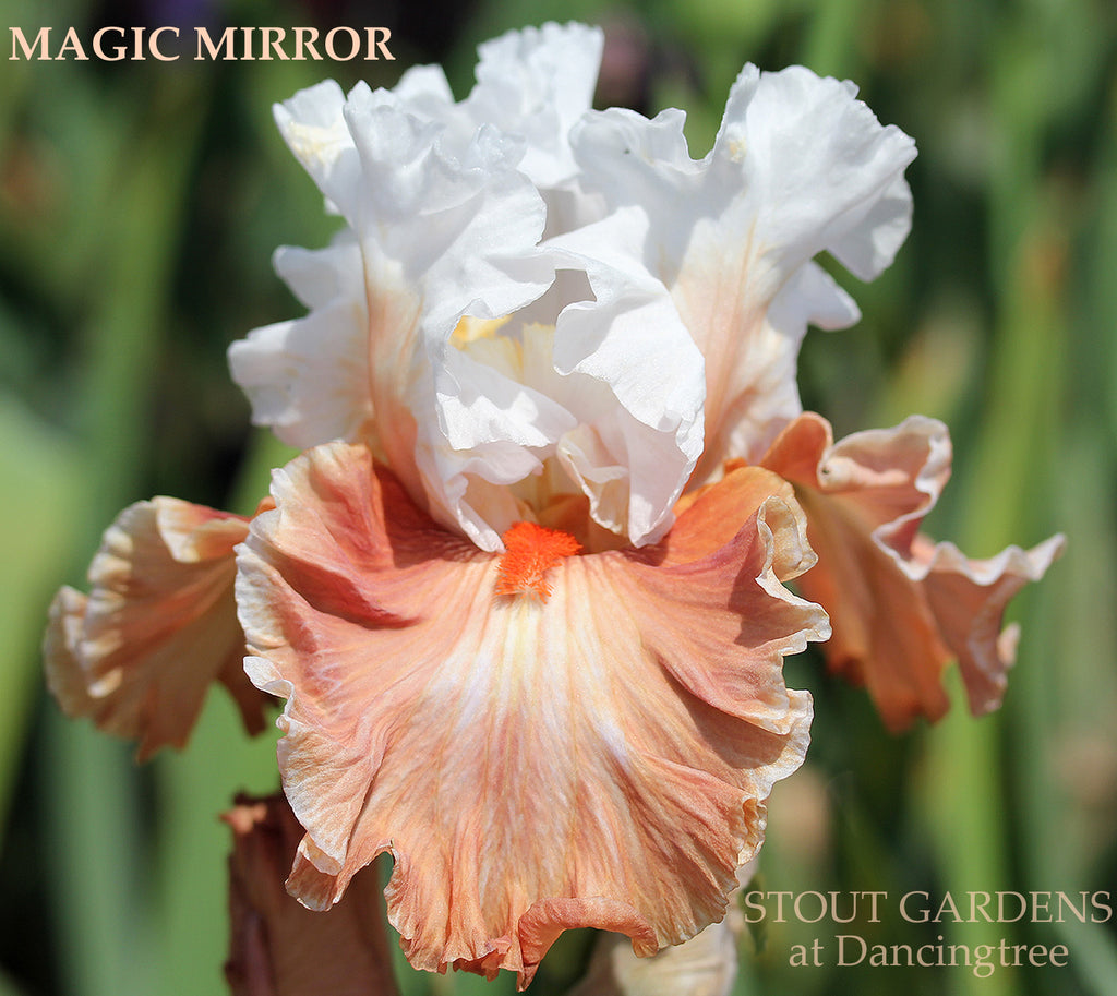 Iris MAGIC MIRROR