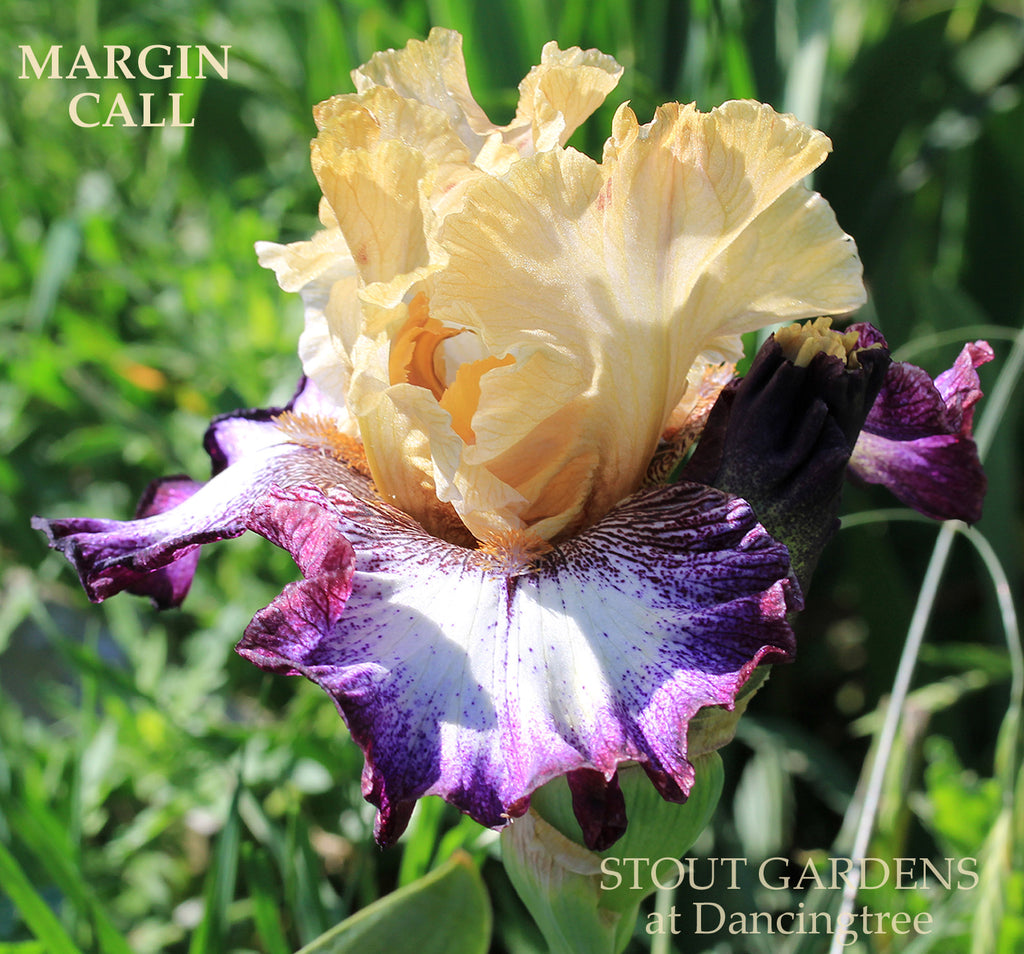 Iris Margin Call