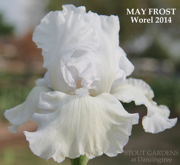 Iris May Frost