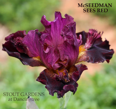 Iris McSeedman Sees Red