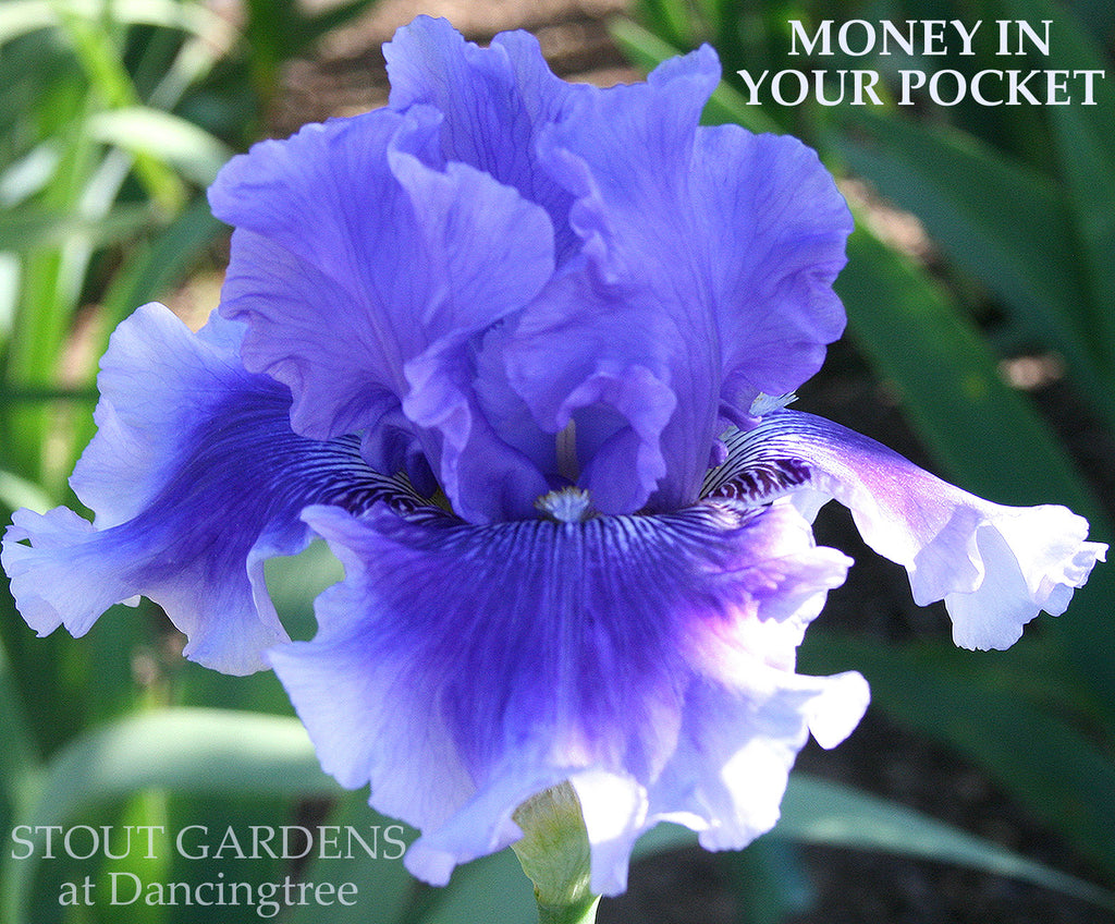 Iris Money In Your Pocket