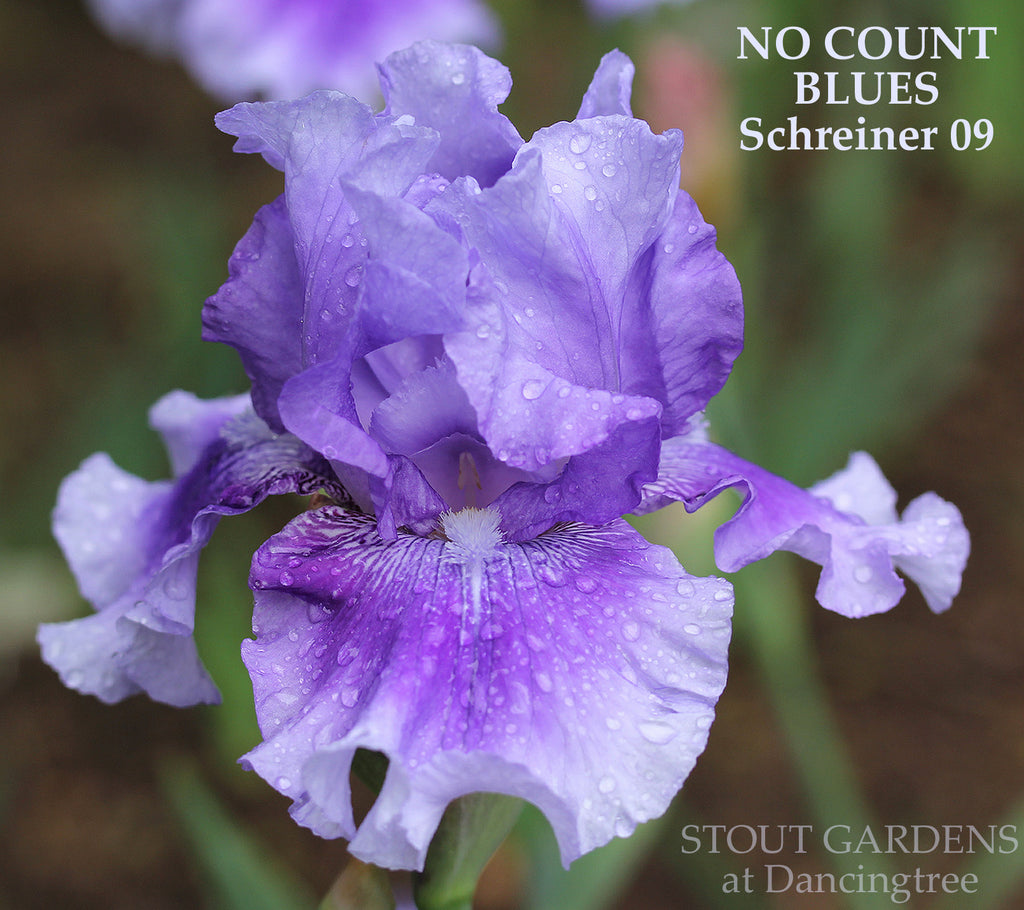 Iris No Count Blues