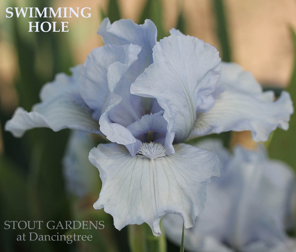 Iris SWIMMING HOLE