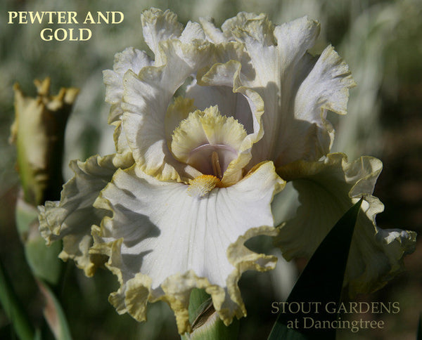 IRIS PEWTER AND GOLD