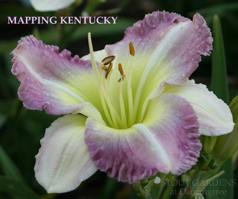 Daylily MAPPING KENTUCKY