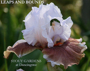 Iris LEAPS AND BOUNDS