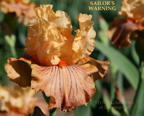 Iris Sailor's Warning