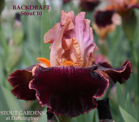 Iris Backdraft
