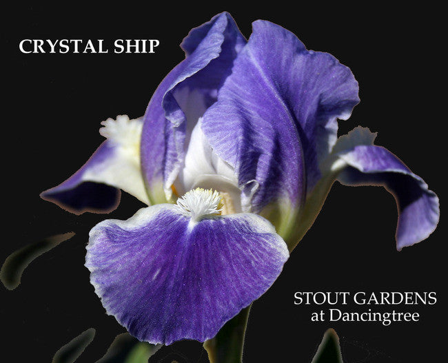 Iris CRYSTAL SHIP