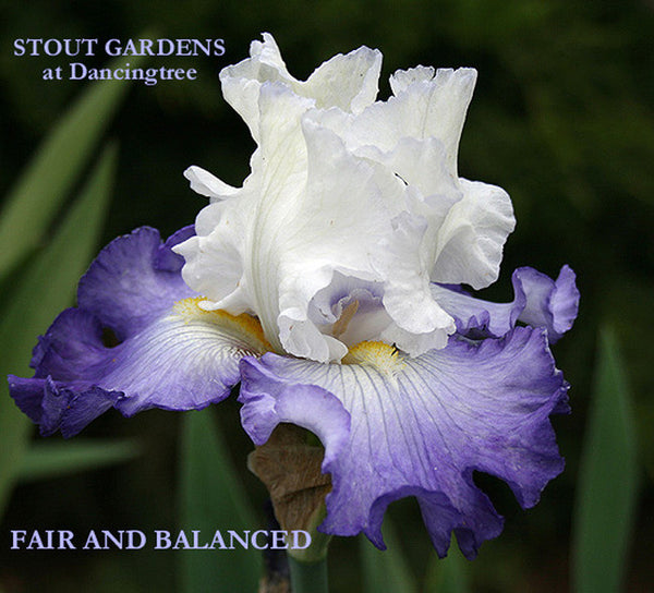 Iris FAIR AND BALANCED