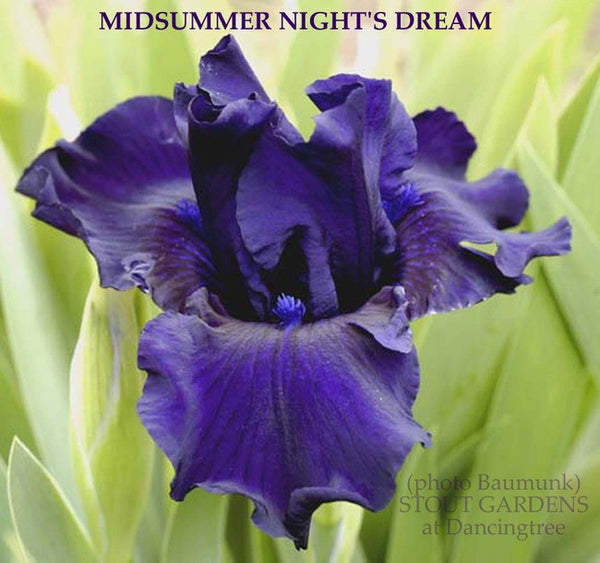 a midsummer night's dream idle iris 163 quotes from a midsummer night's dream: 'love looks not with the eyes, but with the mind,and therefore is winged cupid painted blind'.
