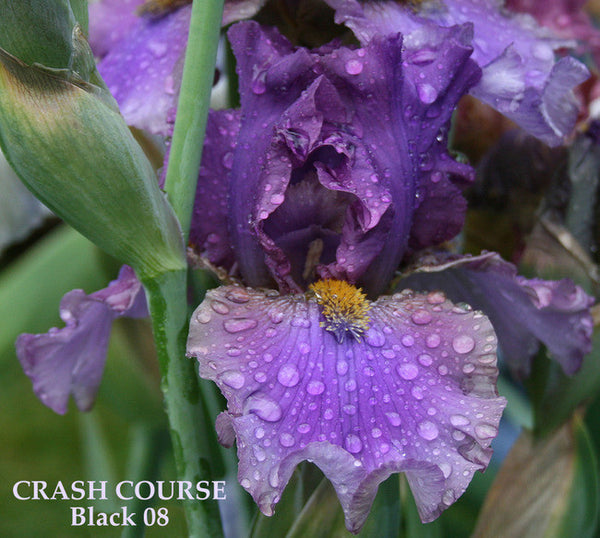 IRIS CRASH COURSE