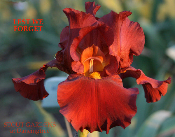 Iris LEST WE FORGET