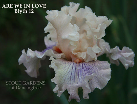 Iris ARE WE IN LOVE