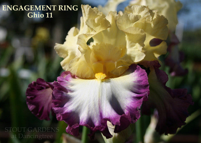 Iris ENGAGEMENT RING