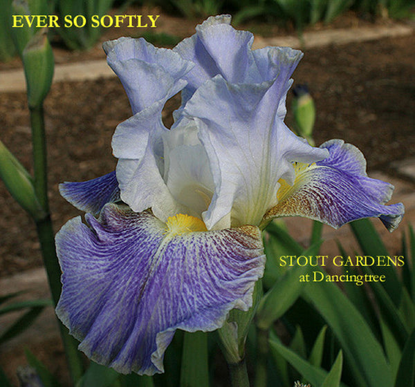 Iris EVER SO SOFTLY
