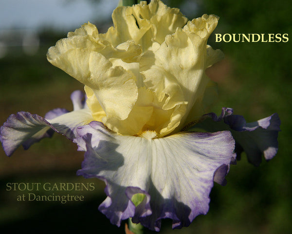 Iris BOUNDLESS