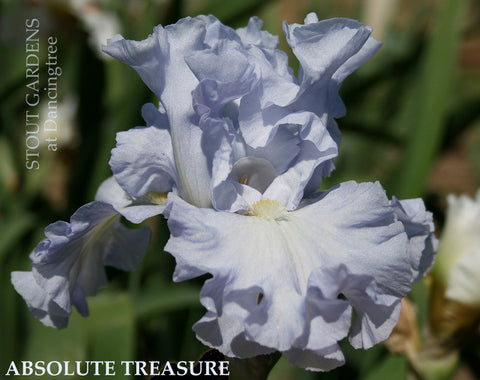 Iris Absolute Treasure