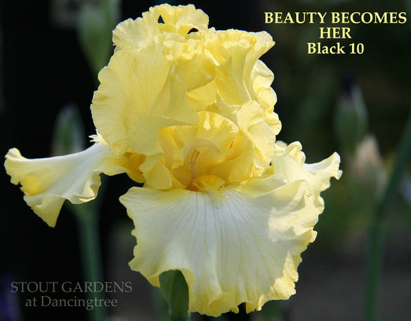 Iris BEAUTY BECOMES HER