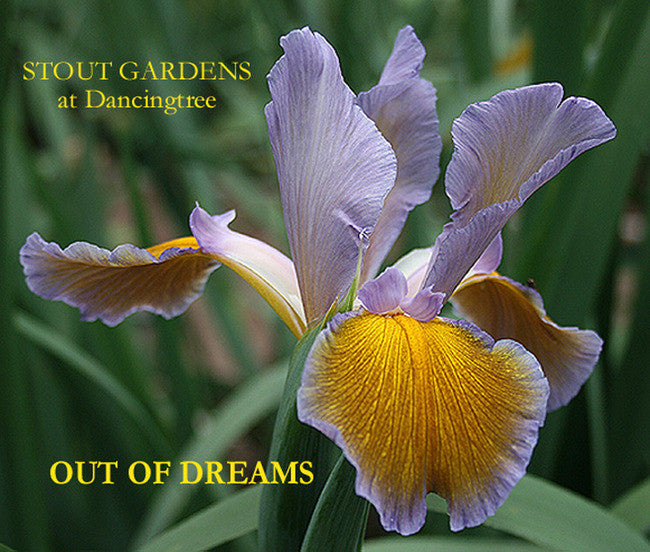 Iris OUT OF DREAMS