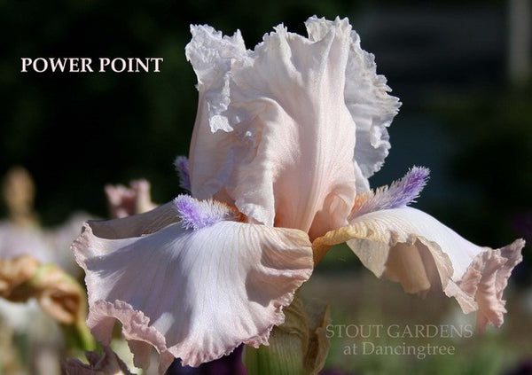 IRIS POWER POINT