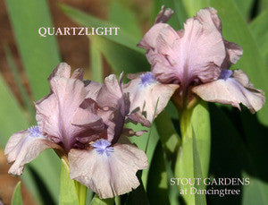 Iris QUARTZLIGHT