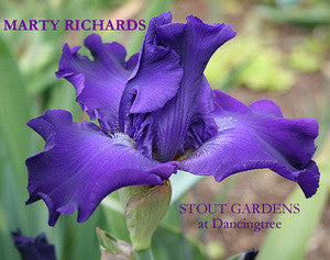 Iris MARTY RICHARDS