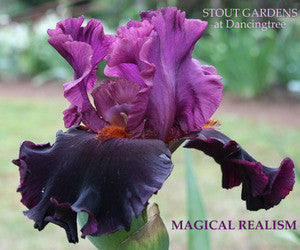 IRIS MAGICAL REALISM